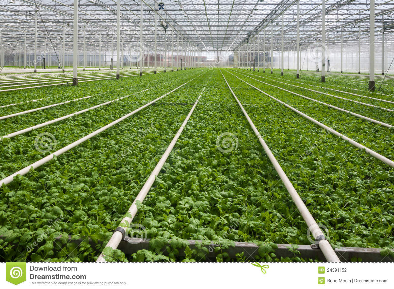 modern dutch greenhouse complex with small plants stock photo image 24391152. Black Bedroom Furniture Sets. Home Design Ideas