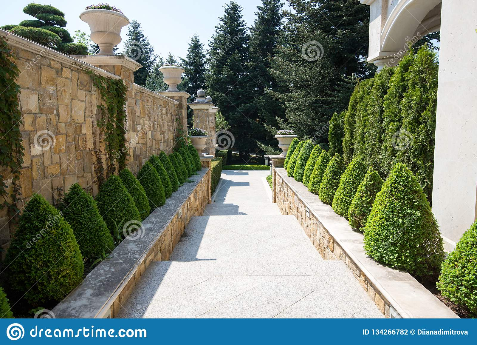Modern Garden Design With Box Trees Bushes Stock Photo Image Of
