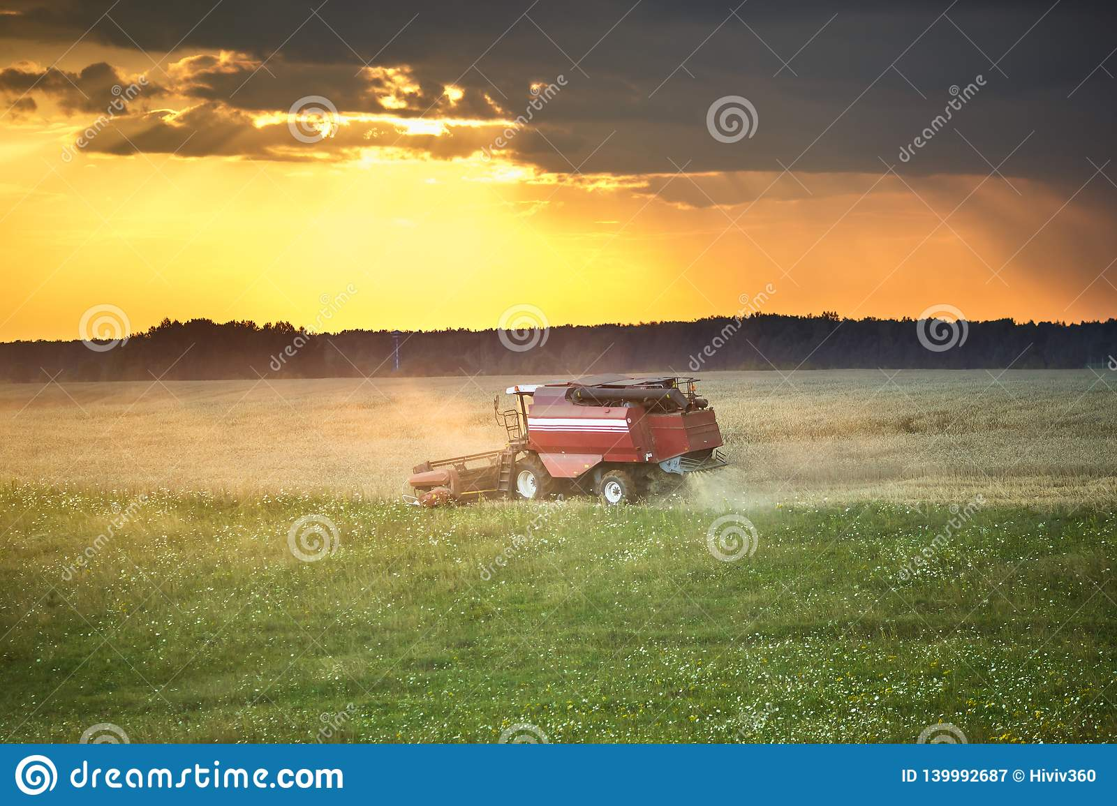 Modern heavy harvester removes the ripe wheat bread in field before the storm. Seasonal agricultural work