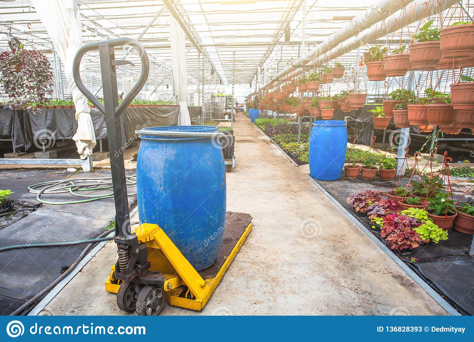 Modern hydroponic greenhouse interior with climate control, cultivation of seedings, flowers. Industrial horticulture