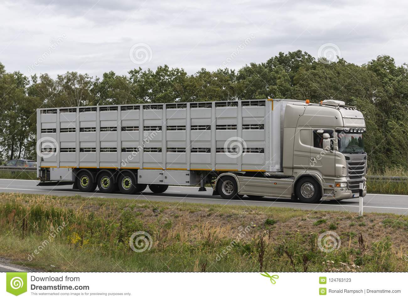 Modern livestock transporter on its way to the slaughterhouse