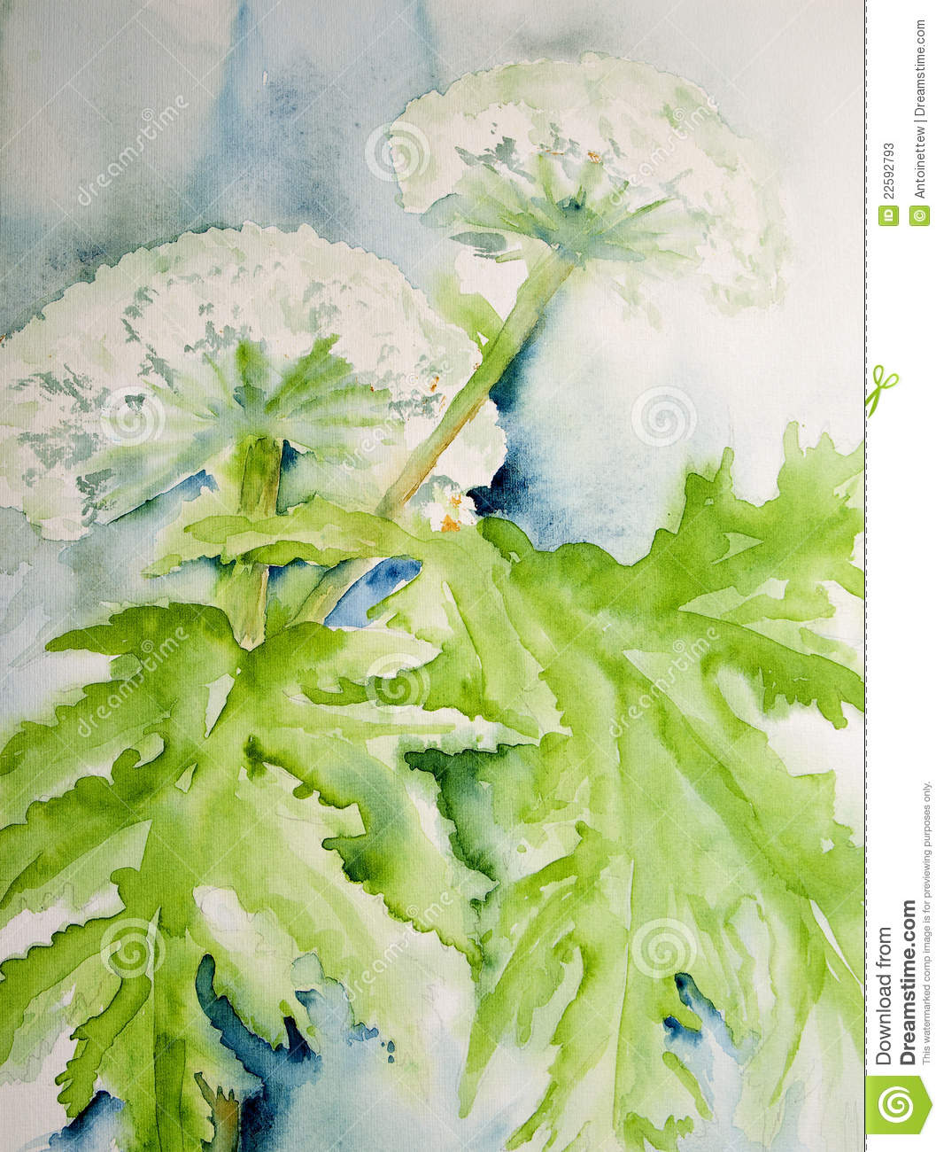 Modern watercolor painting of the Giant Hog weed