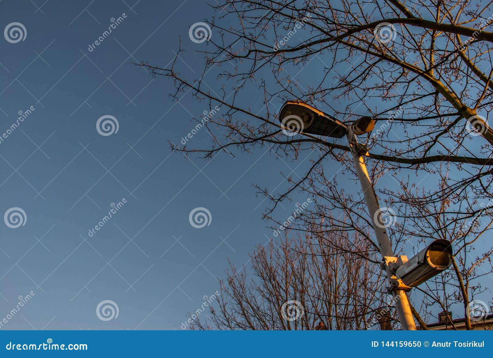 Moderne kabeltelevisie op bomen en hemelachtergronden