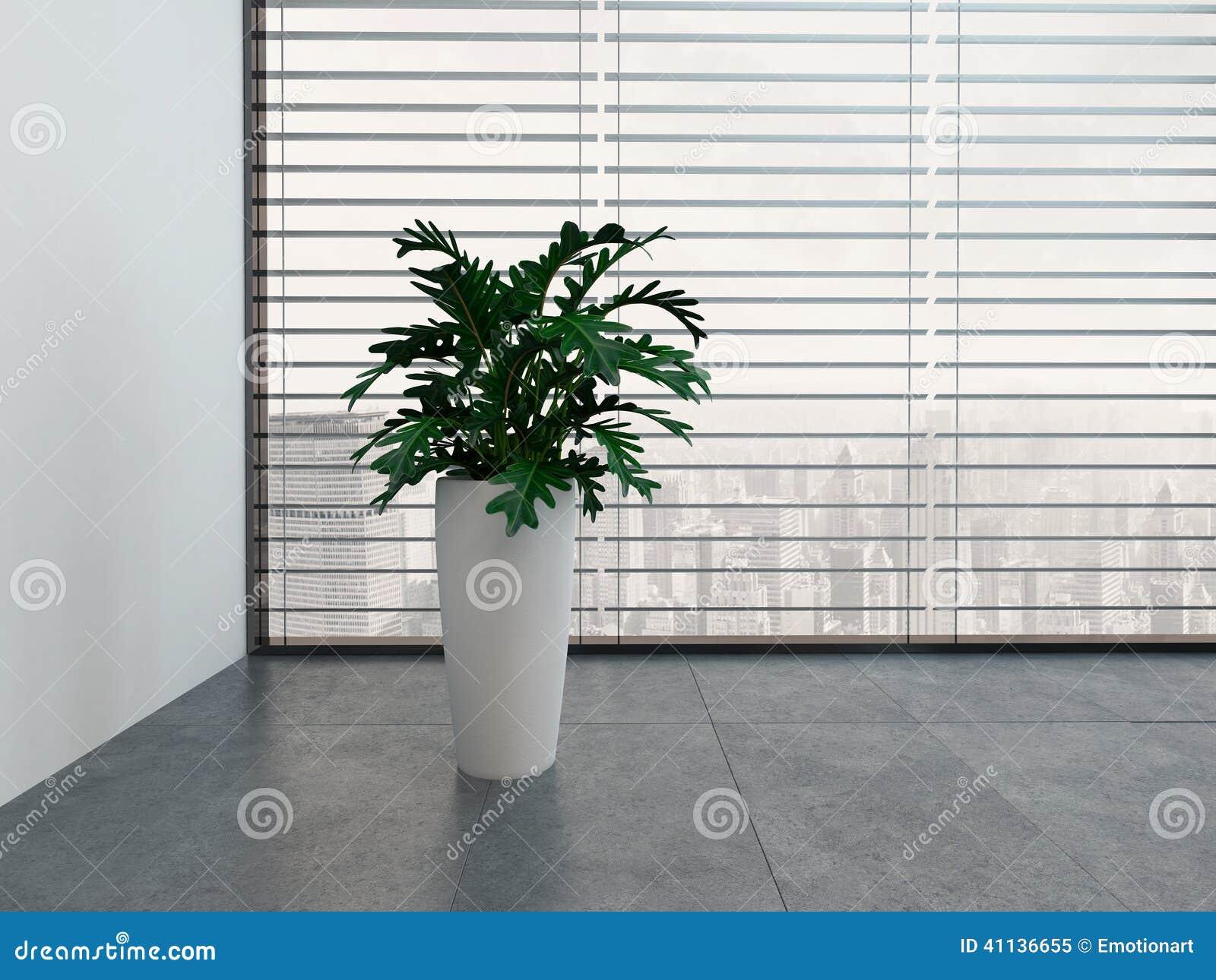 Moderner leerer raum mit gr npflanze und topf der wei en for Moderner raum