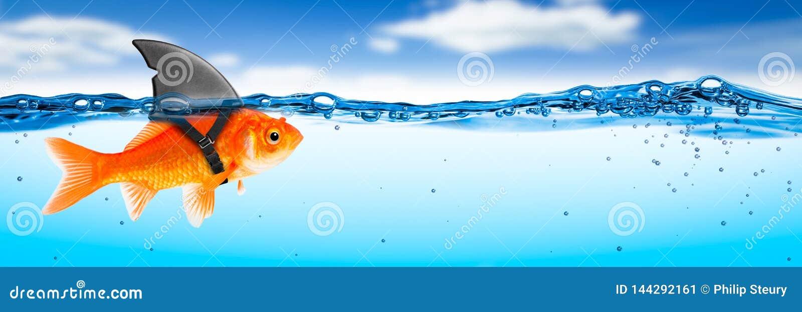 Modig guldfisk med hajfenadräkten