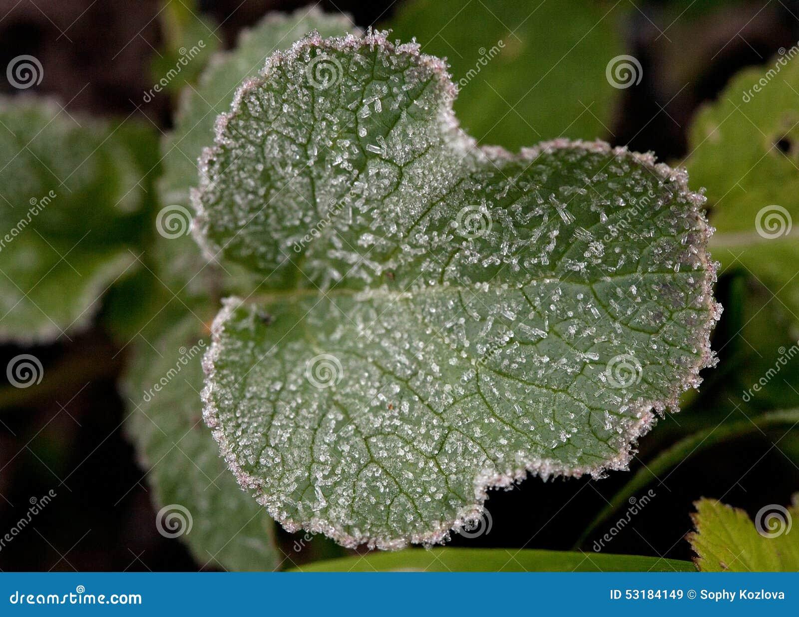 Mod le de feuille de plante verte avec la fronti re blanche de givre photo stock image 53184149 - Puceron blanc plante verte ...
