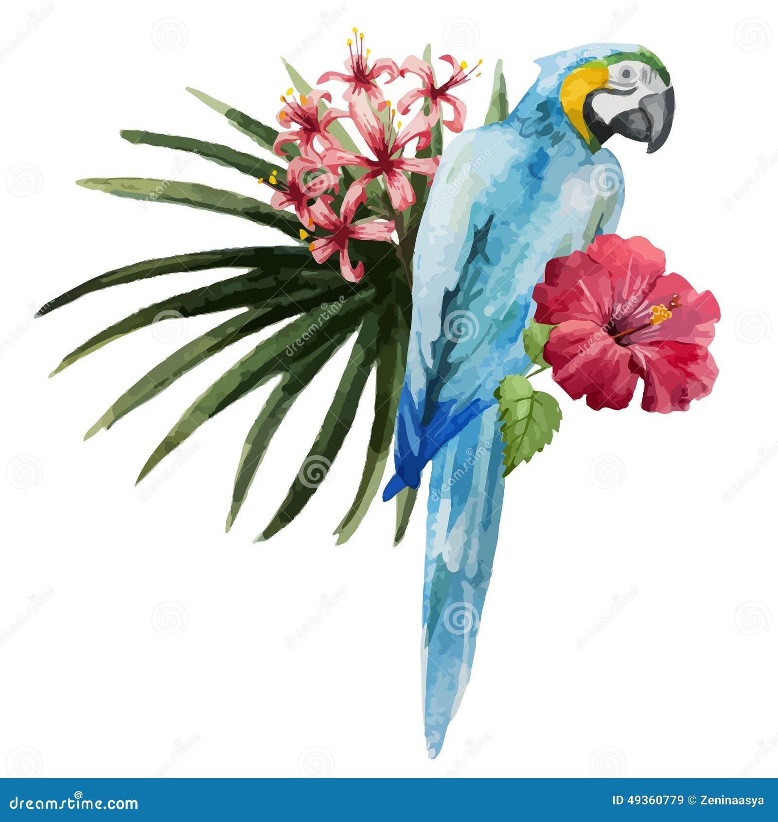 Modèle, Tropical, Aquarelle Illustration Stock - Image: 49360779