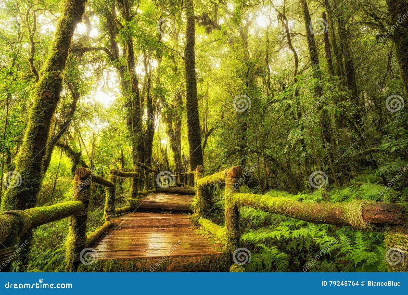 Modo della passeggiata della foresta pluviale, Ang Ka Nature Trail