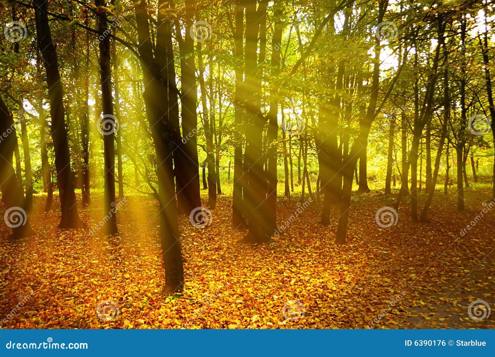 Modo do outono