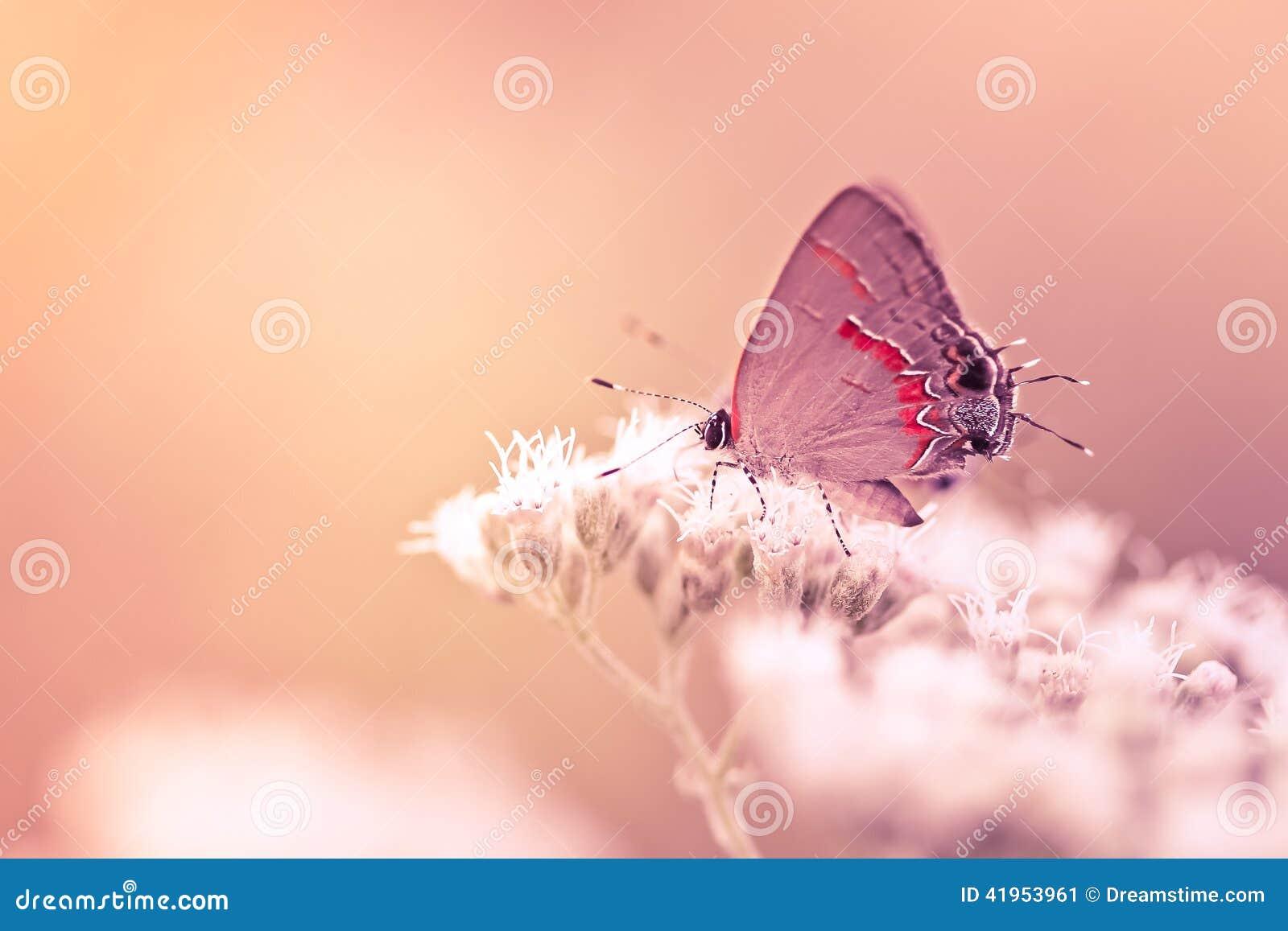 Modraszka motyl Na kwiacie