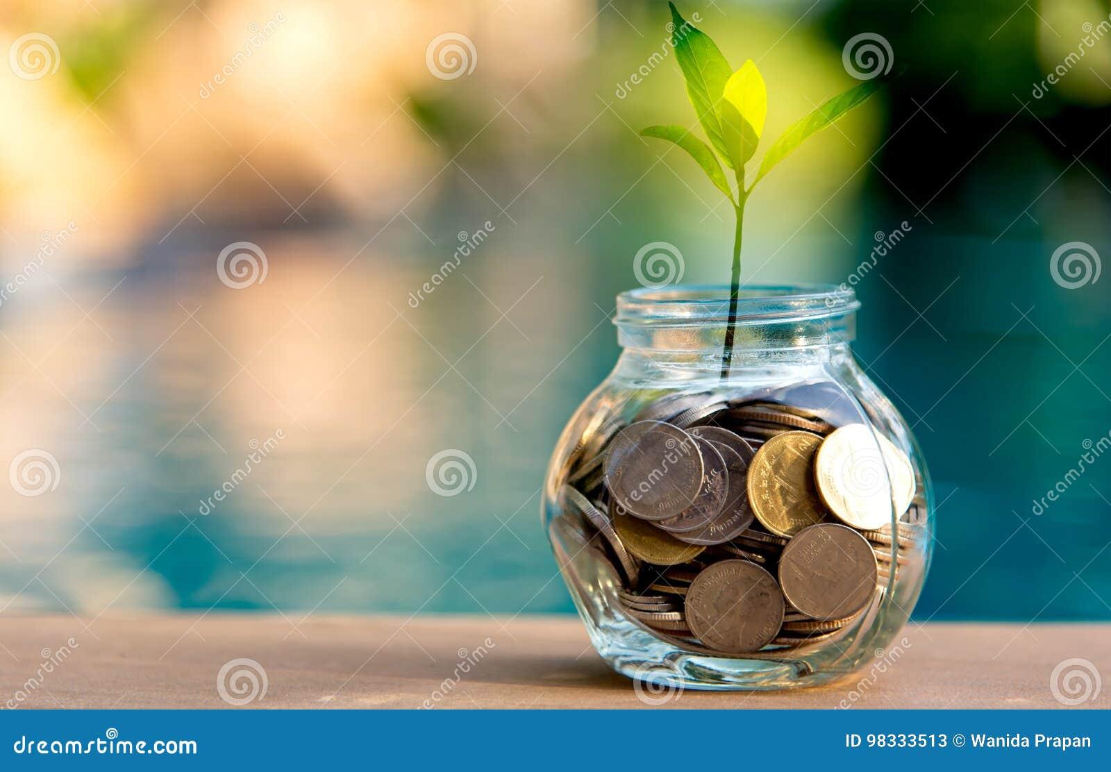 Moeda do dinheiro das economias completamente de leitão de vidro Planta que cresce em moedas das economias