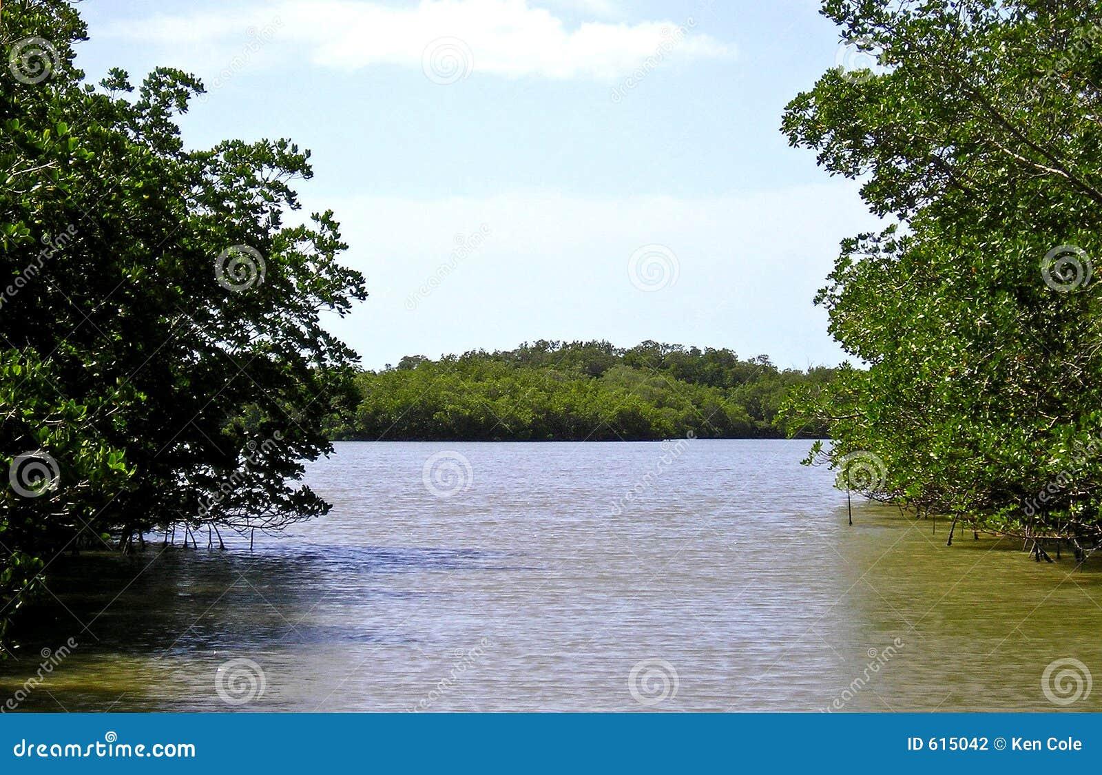 Moeras 1 van de mangrove - Everglades