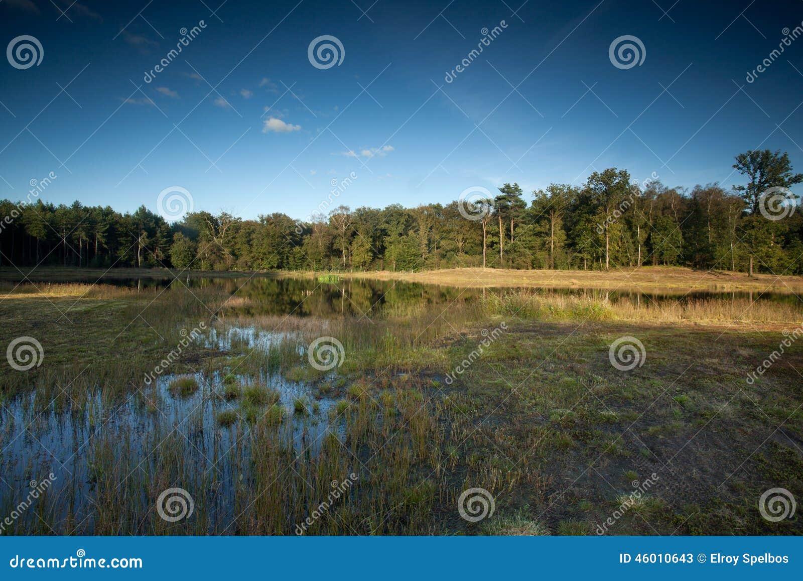 Moeraslandschap met moeras op de voorgrond