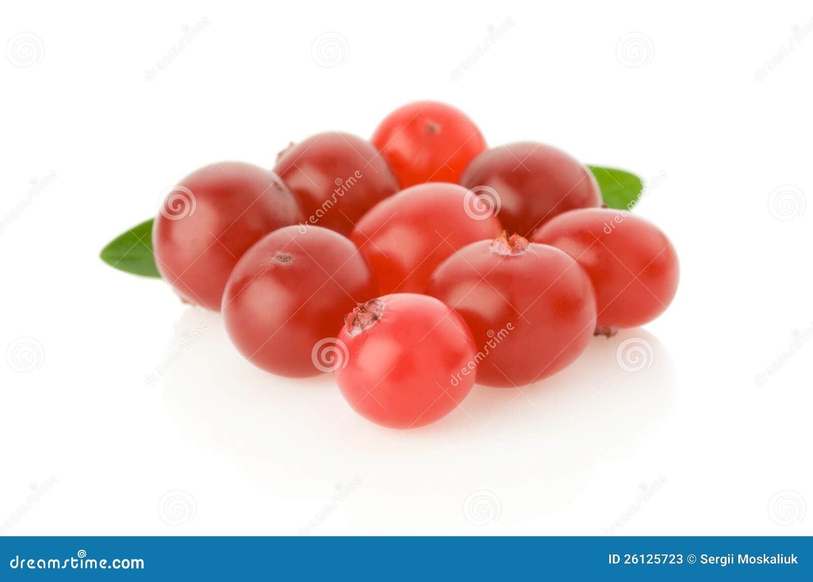 Mogen cranberry på white