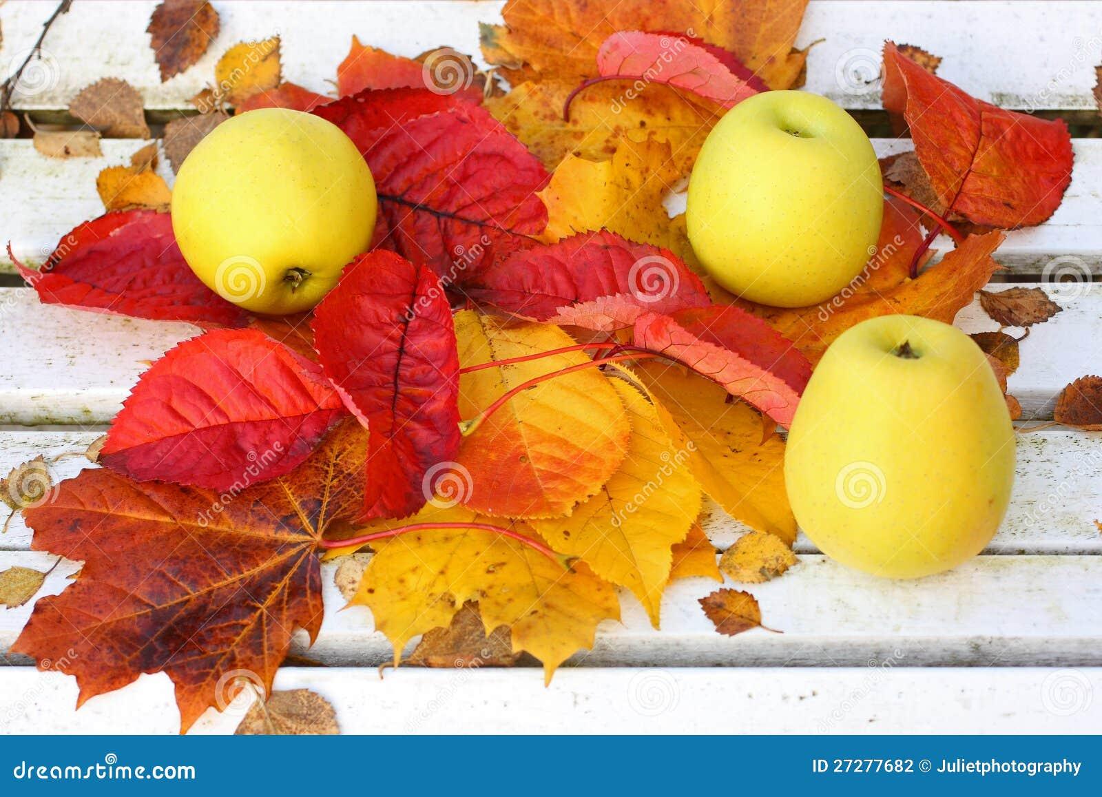 Mogna gröna äpplen i trädgården, hösttid