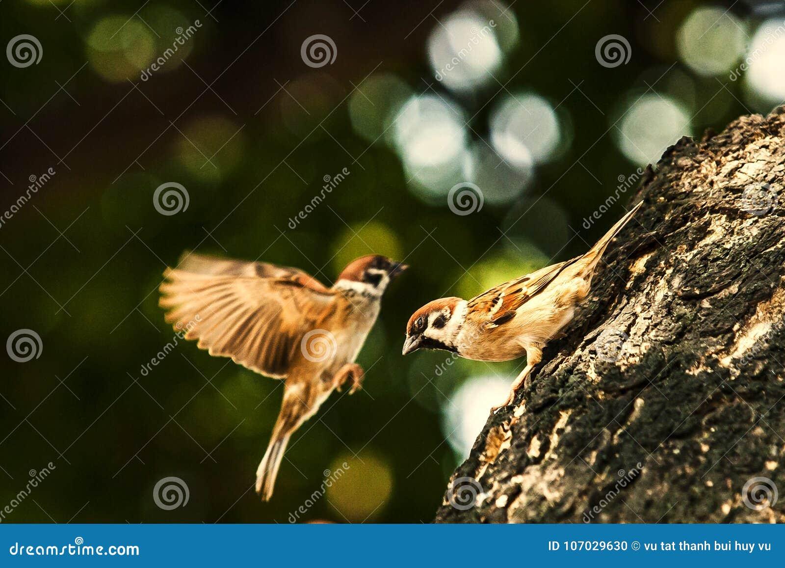 Moineau quand les oiseaux retournent Ensemble de domesticus de passant gratuit