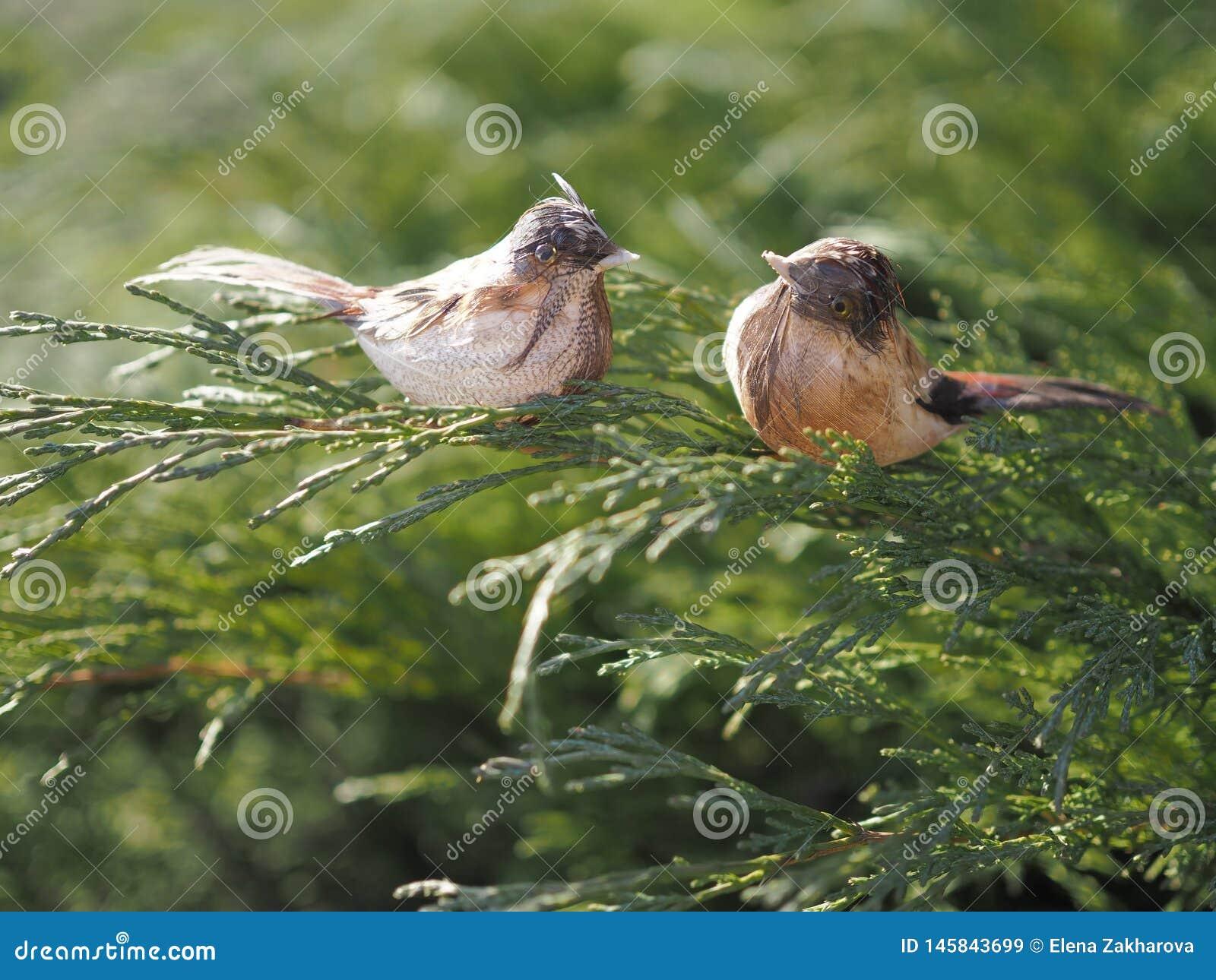 Moineaux d?coratifs d oiseaux sur une branche du gen?vrier de Cosaque