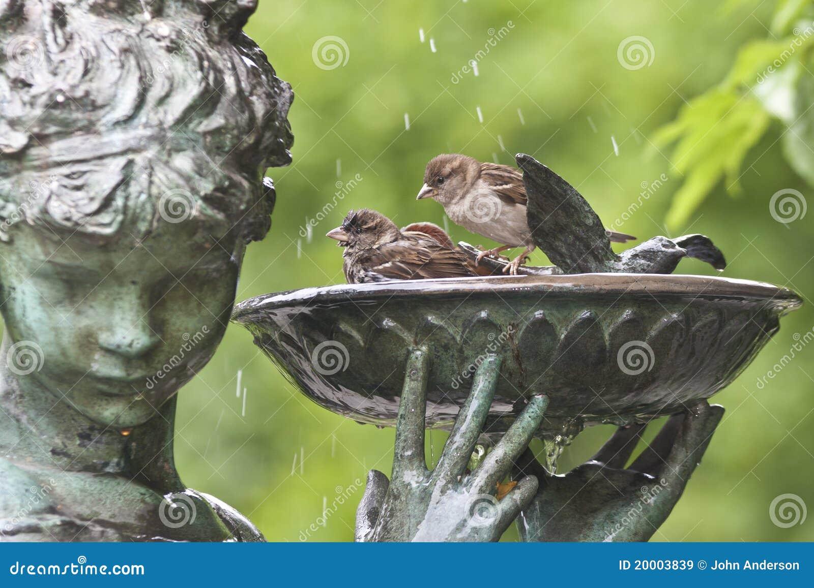 moineaux dans le bain d 39 oiseau image stock image 20003839. Black Bedroom Furniture Sets. Home Design Ideas