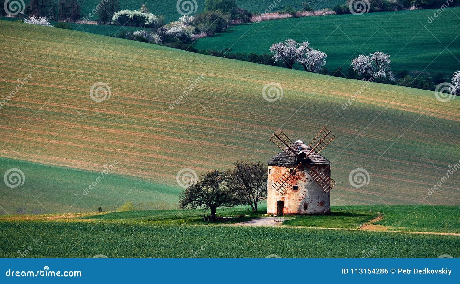 Moinho de vento velho em um fundo de montes amarelos e das árvores brancas em Kunkovice