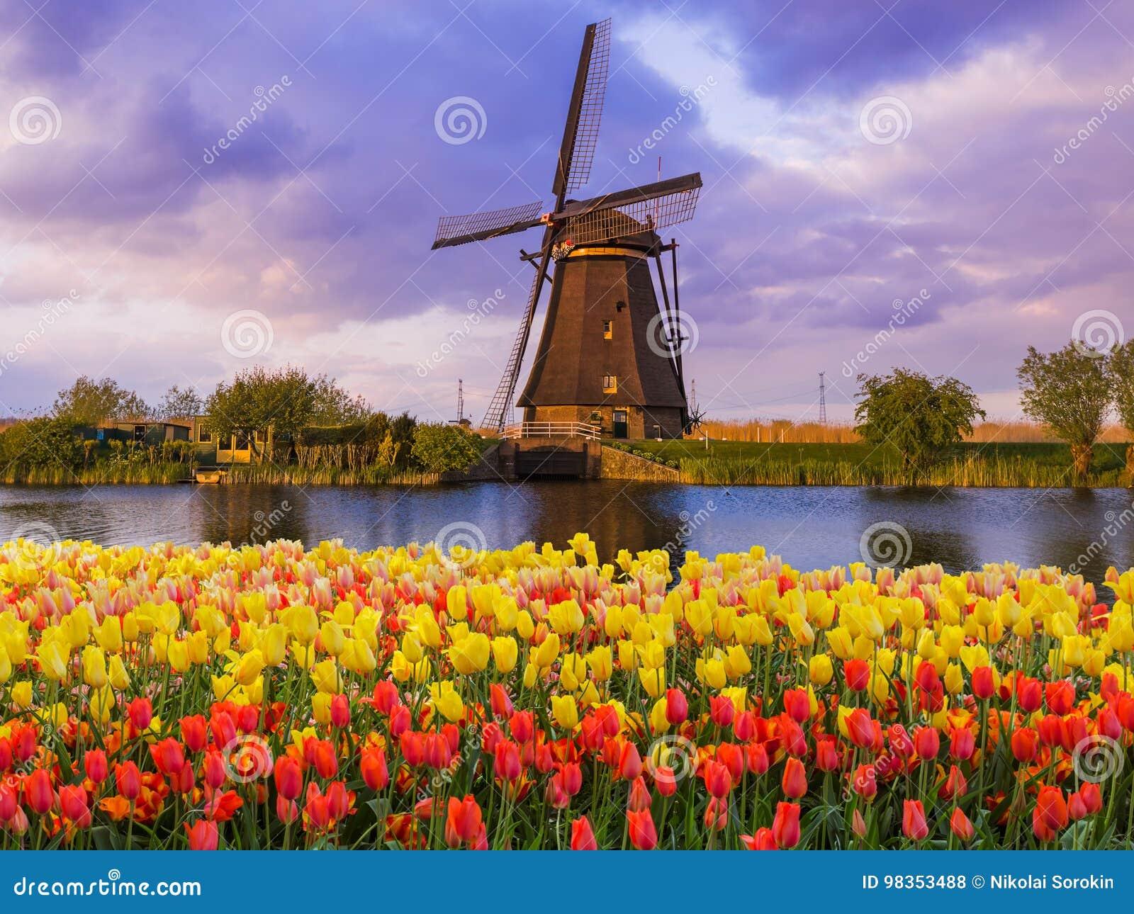 Moinhos de vento e flores em Países Baixos