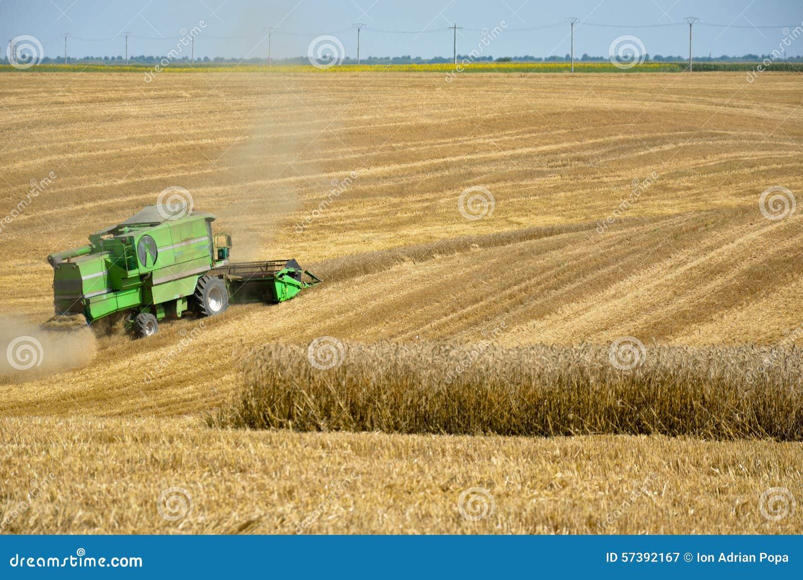 Moissonneuse de cartel moissonnant le champ de blé