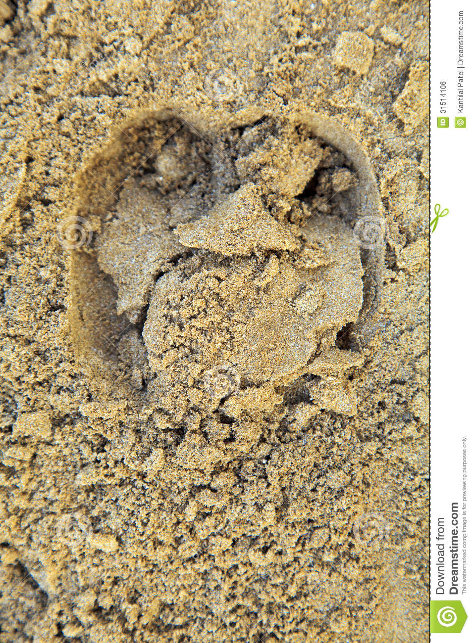Moist Beach Sand With Bull Hoof Print Stock Photo Image Of