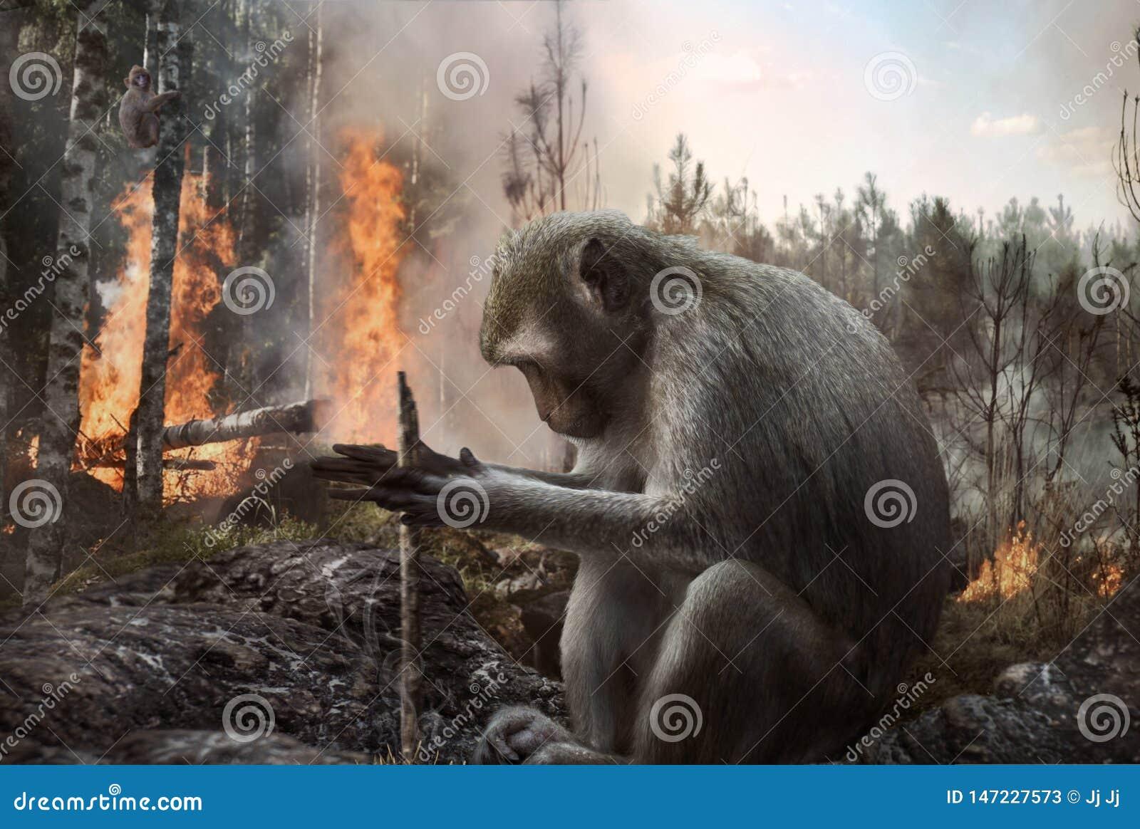 Mokey de pyromane mettant le feu dans le déboisement de forêt, danger, environnement