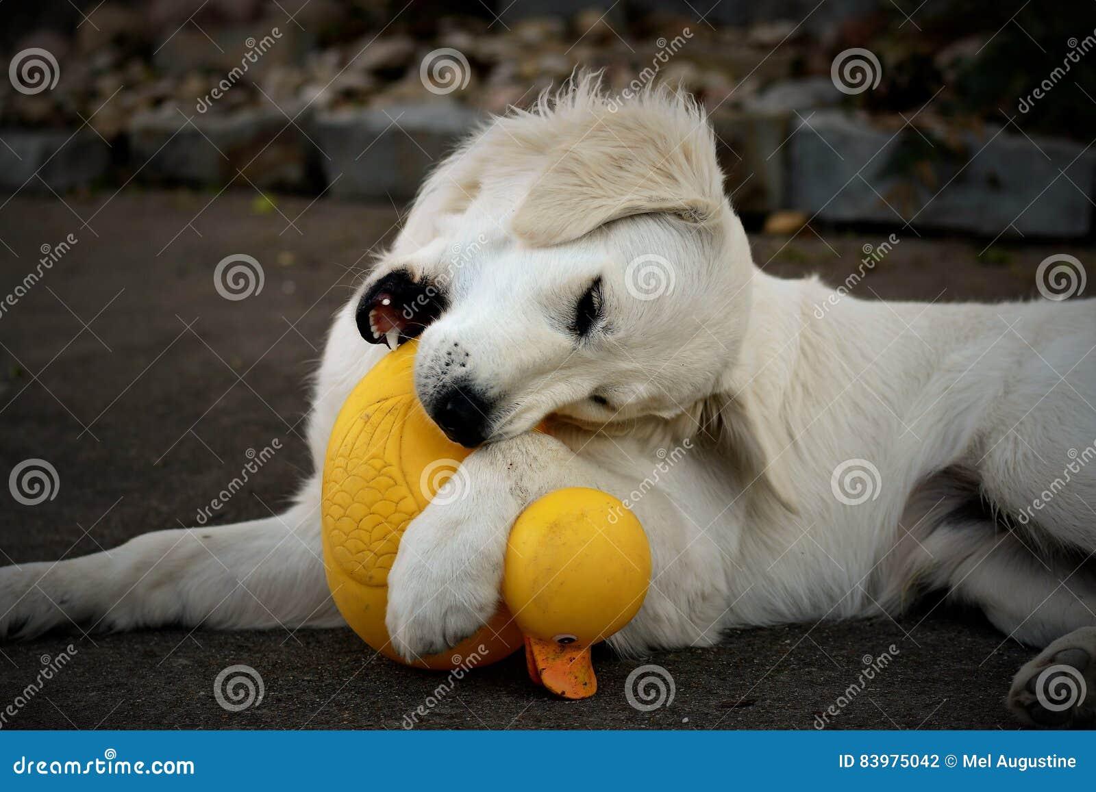 Mokry Biały szczeniak