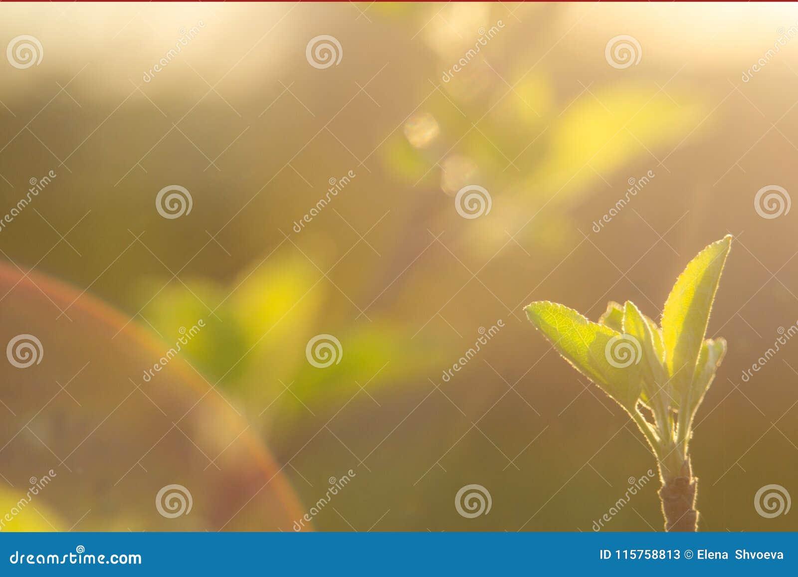 A mola está aqui Os raios brilhantes do sol de ajuste no fundo do primeiro borrado esverdeiam com produtos manufaturados brilhant