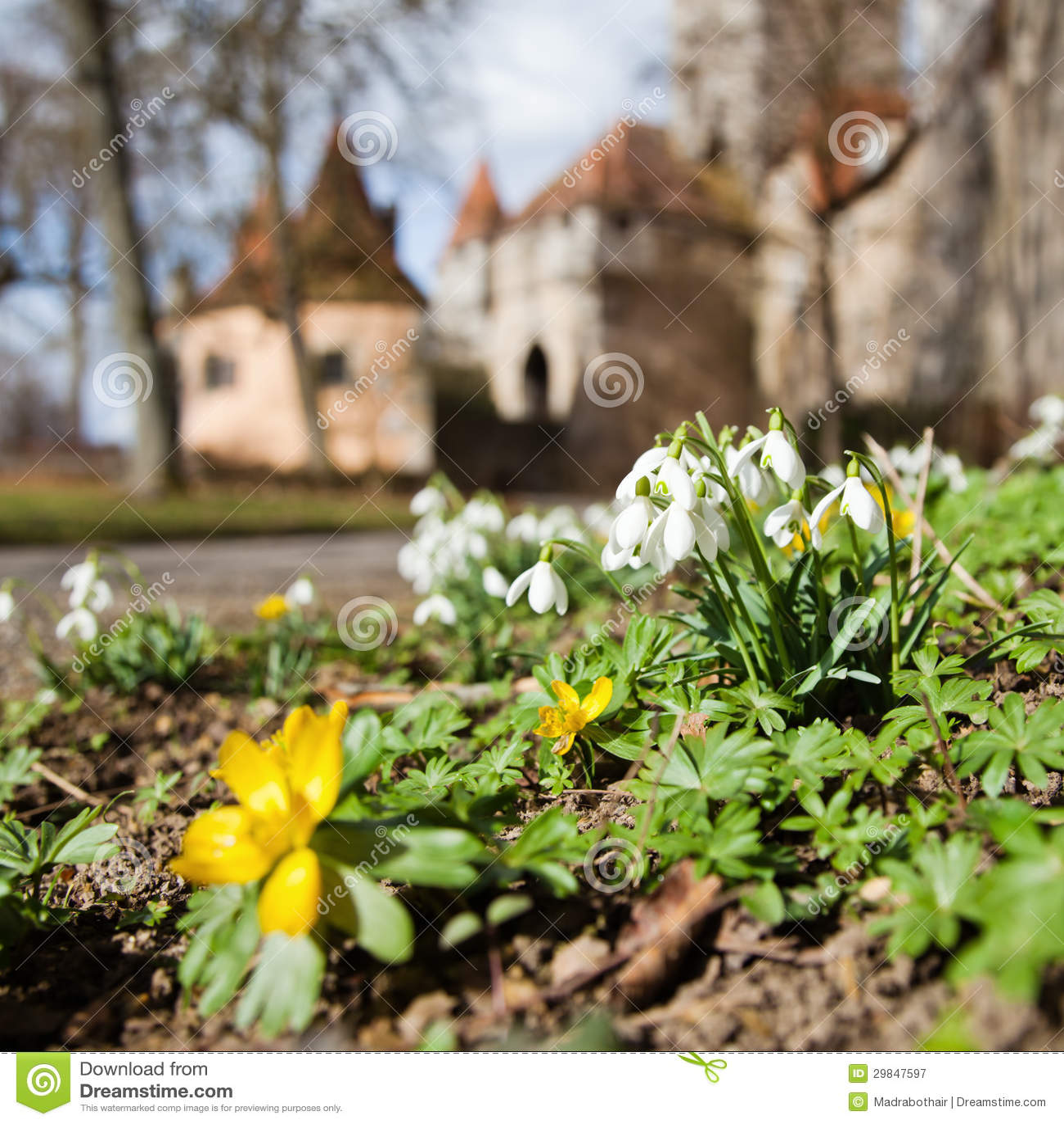 Flores da mola com o Rothenburg no fundo