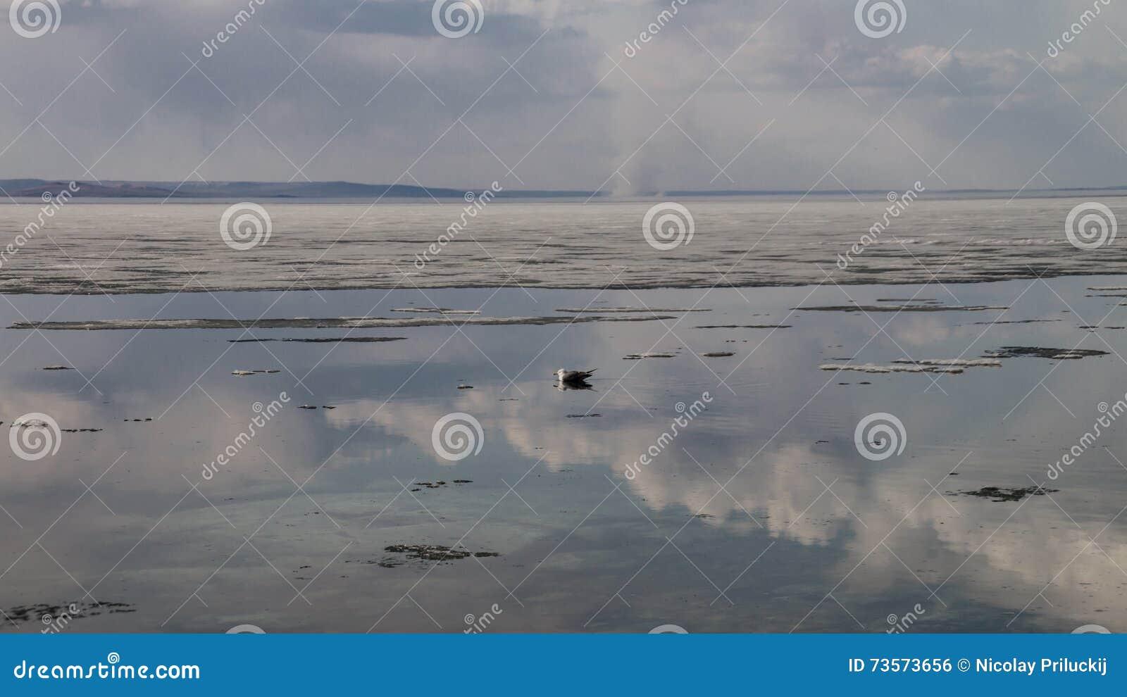 Mola no beira-mar