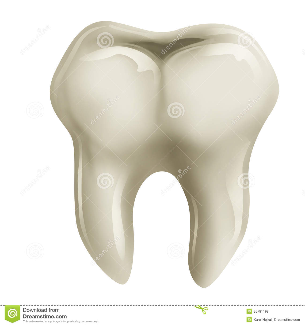 Hand Drawn Illustration Of A Molar Tooth