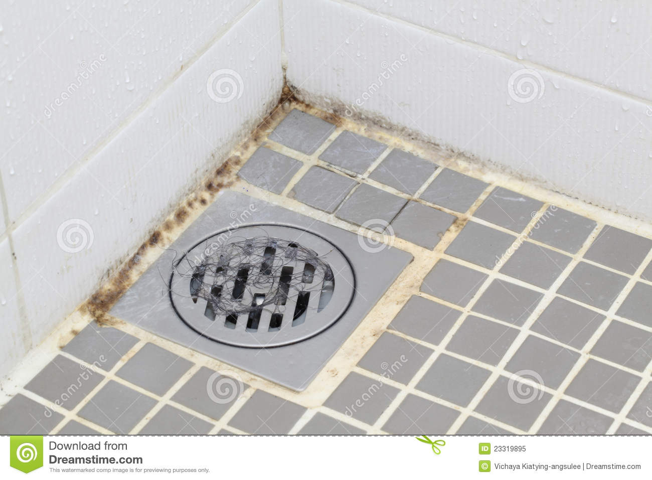 Mold In Bathroom Royalty Free Stock Photo Image 23319895