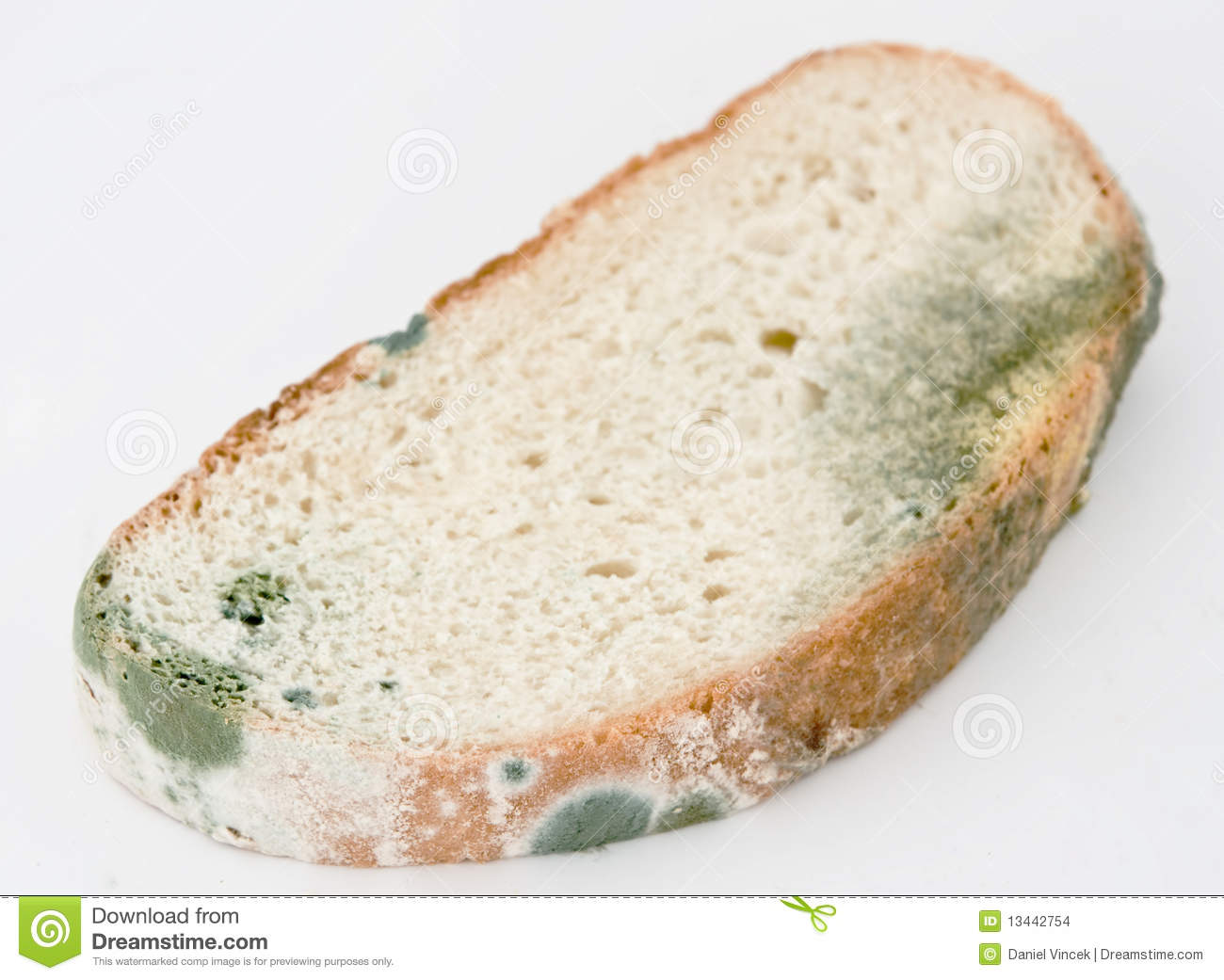 Mold On Bread Stock Images - Image: 13442754