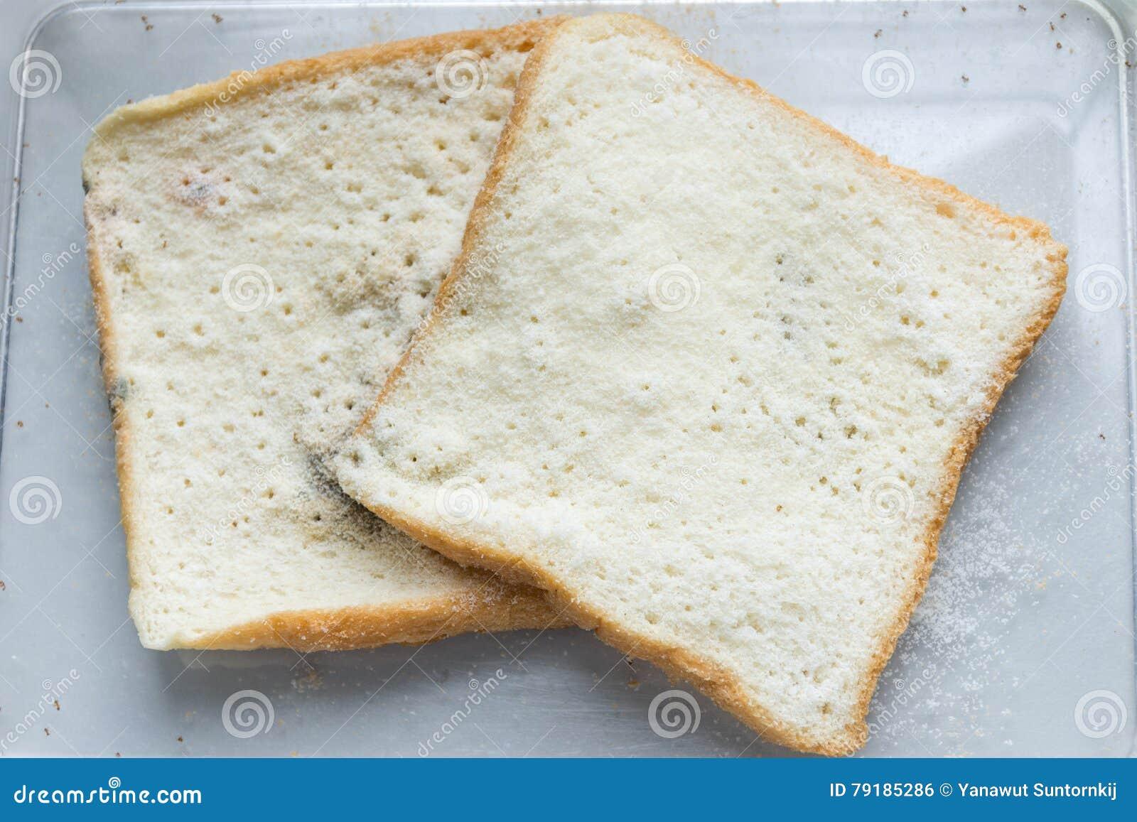 bread mold lab
