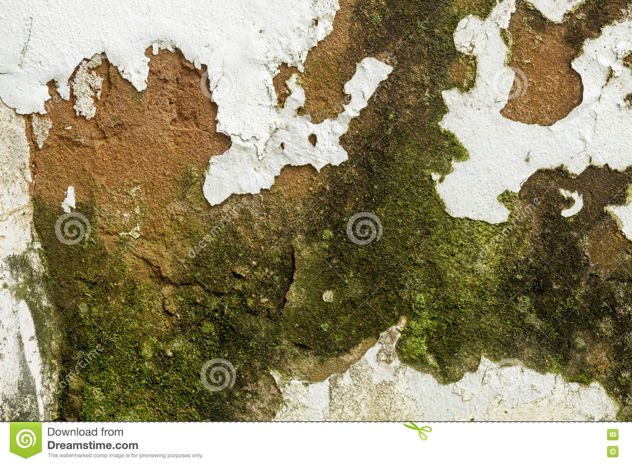 Mold Fungus Peeling Flaking Paint Due To Rising Damp Stock Photo Image Of Mould Flakes 80226938
