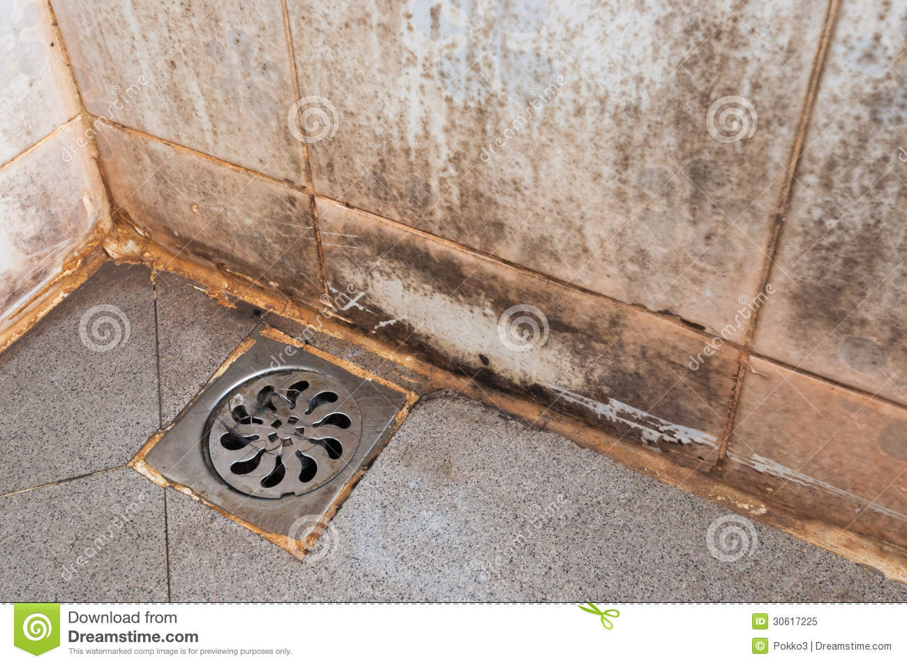 Mold Growing On Shower Tiles Royalty Free Stock Photo ...