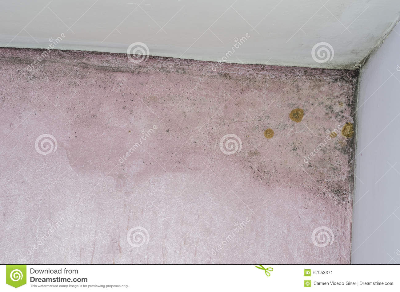 Mold and moisture buildup on pink wall