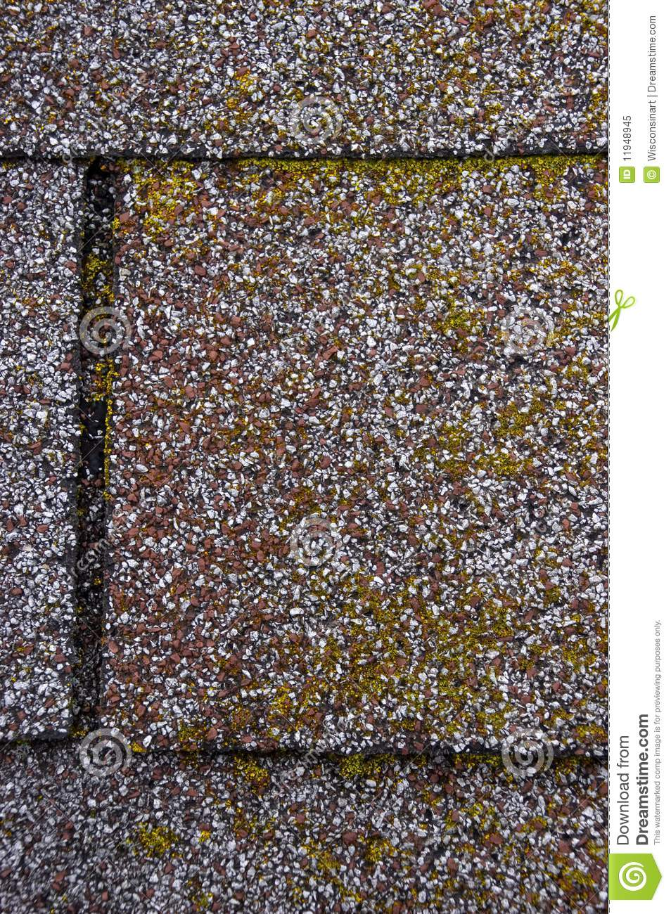 Mold/Moss Damage on House Roof Shingles
