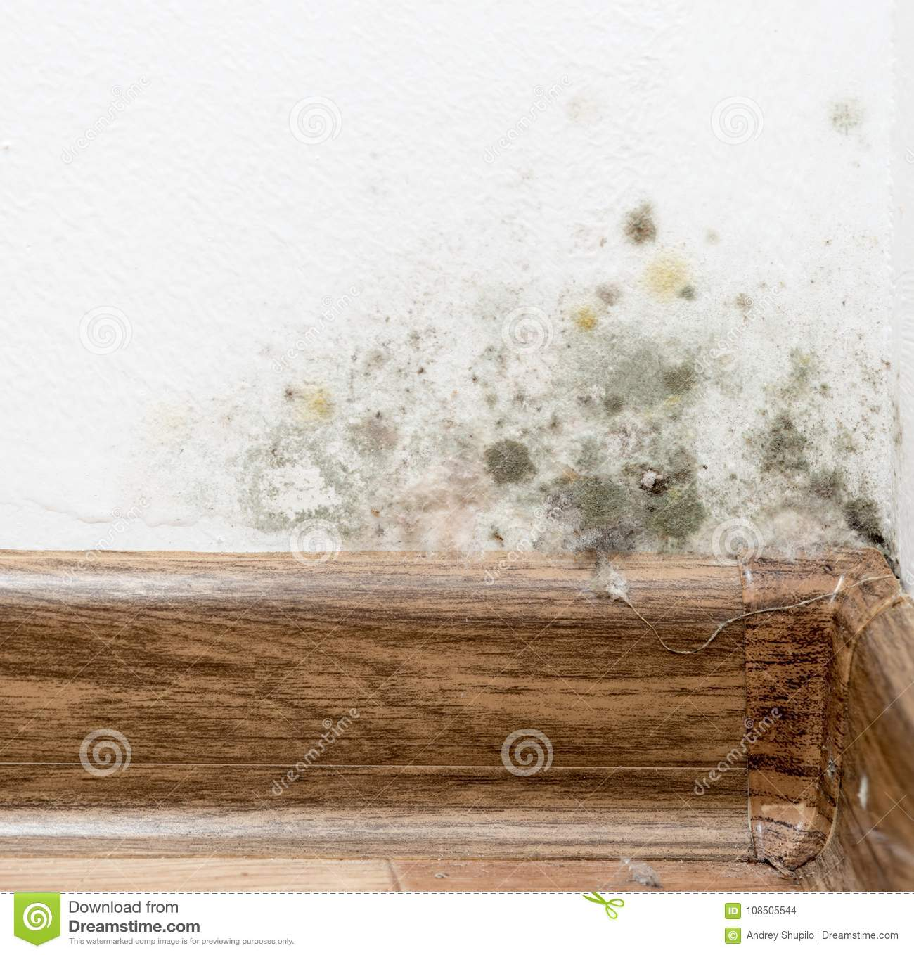Mold on the white wall in the house