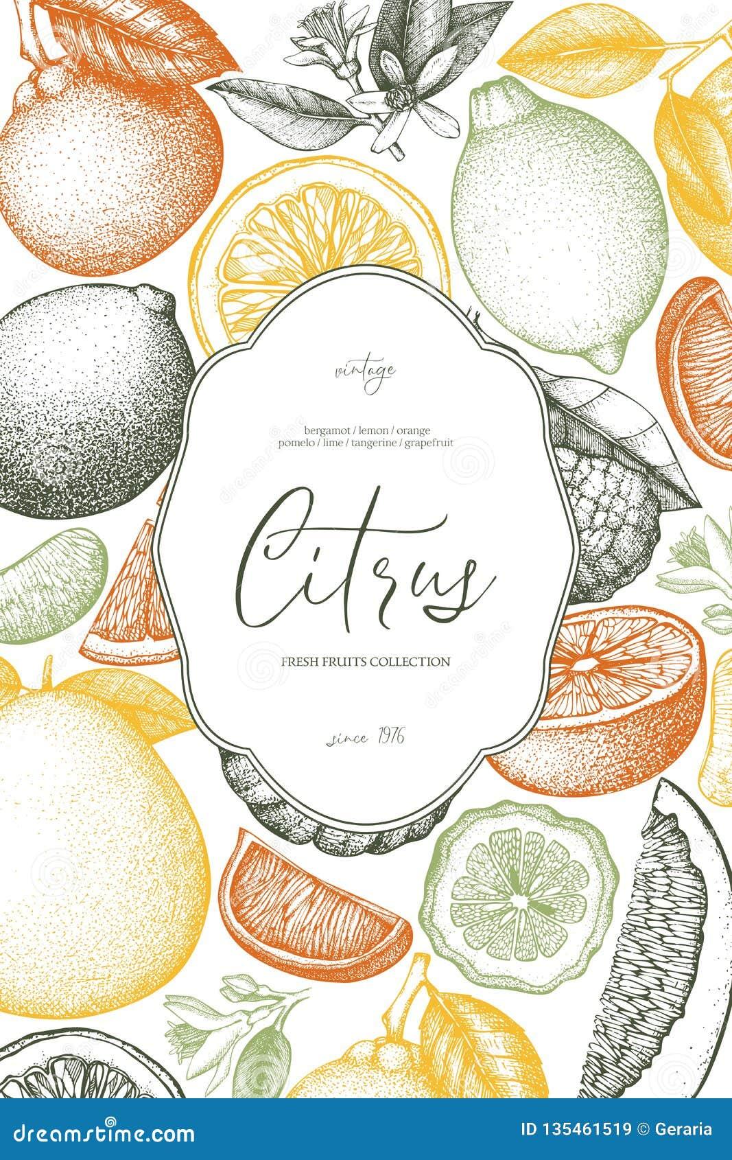 Molde do vintage Projeto tirado mão da tinta com citrinas Ilustração do vetor no quadro Esboço exótico altamente detalhado do fru