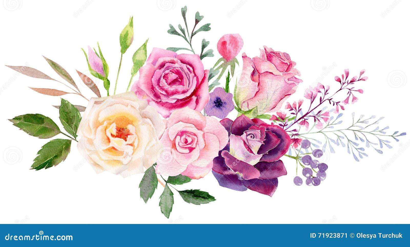 Molde pintado à mão do clipart do modelo da aquarela das rosas