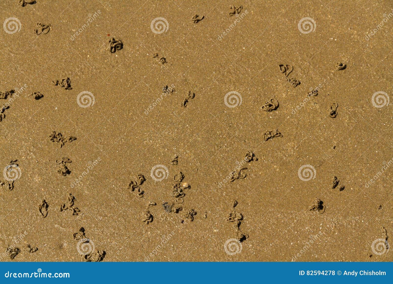 Moldes del gusano de la lombriz para cebo en la playa