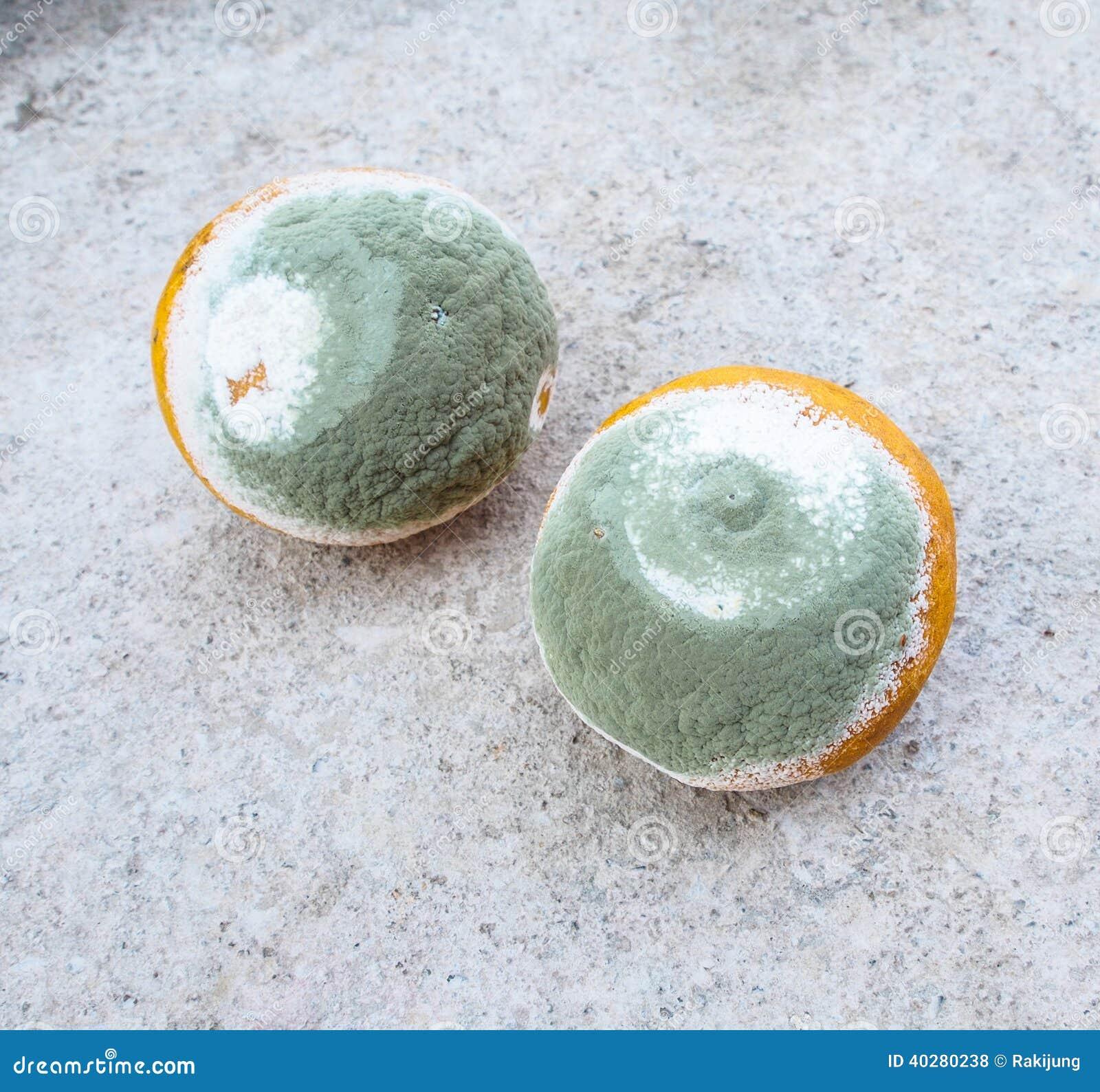 Moldy апельсины