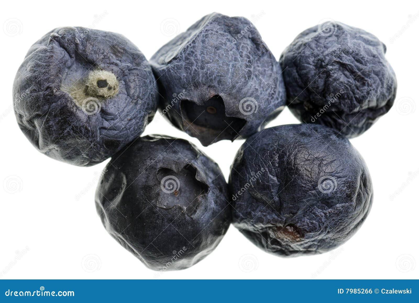 Moldy blueberries royalty free stock image image 7985266