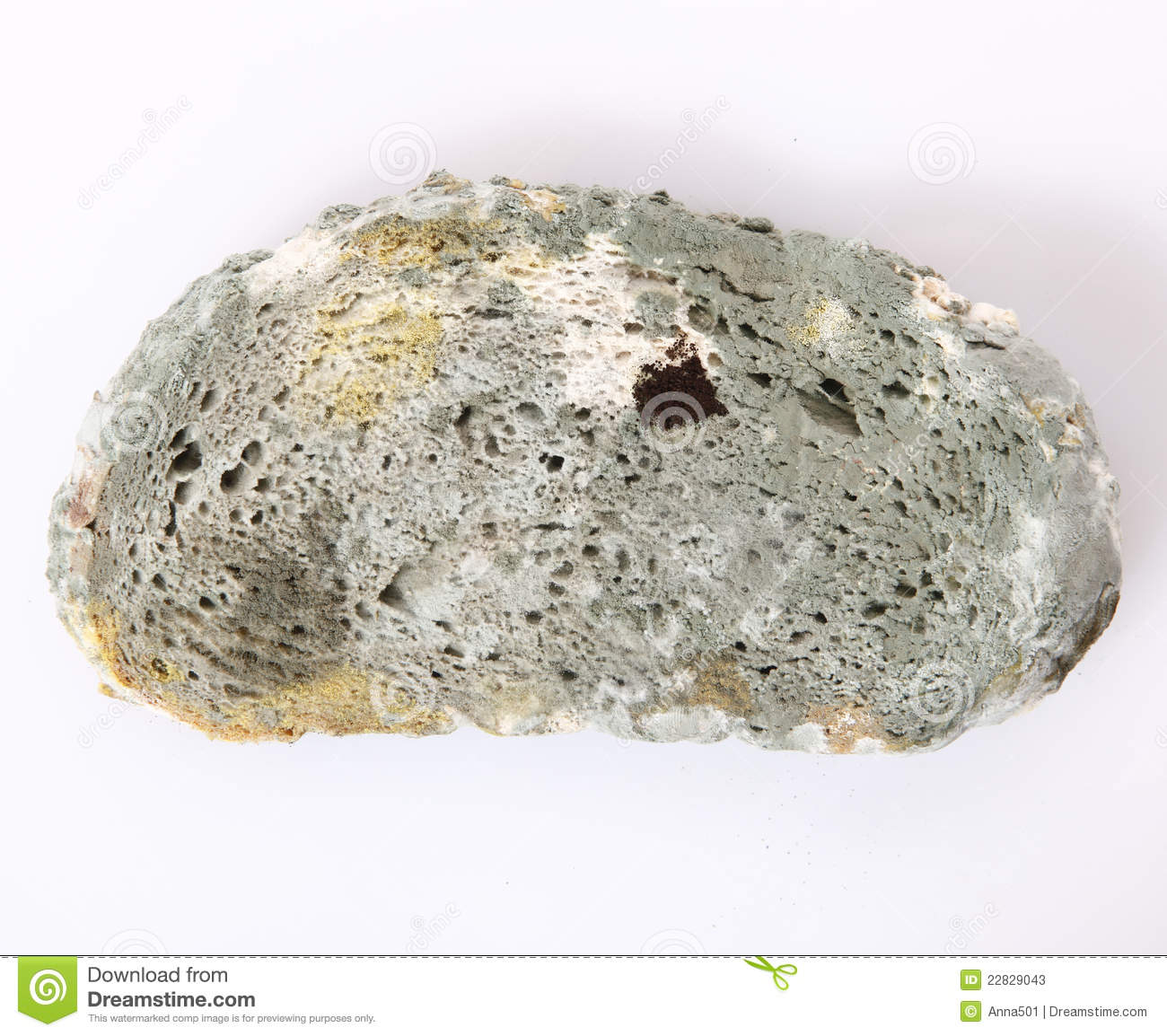 Moldy bread stock image. Image of moldy, growth ...