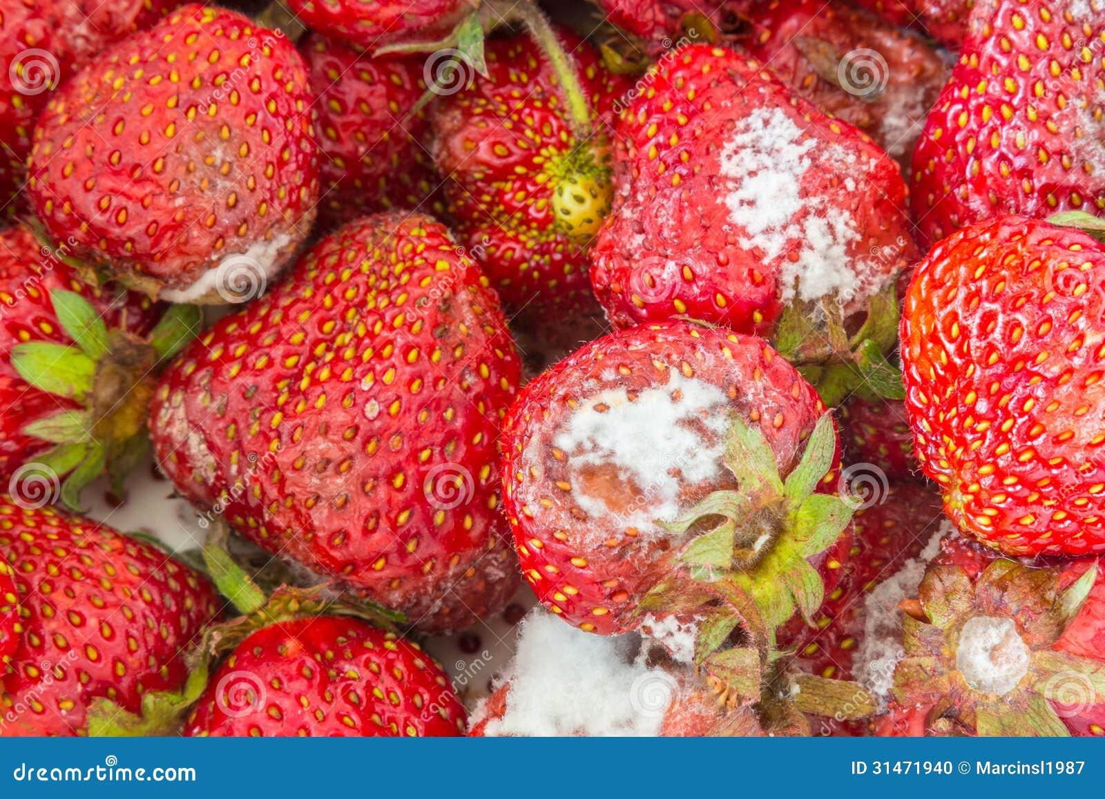 Rotten Strawberries Moldy Strawberries Sto...