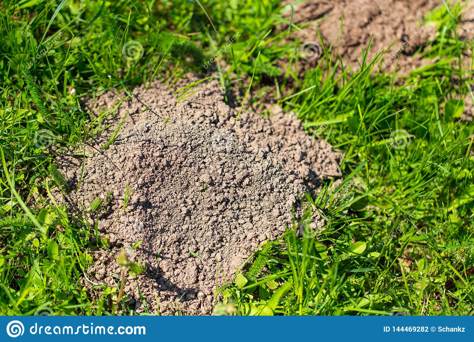 Mole dug in the ground in spring