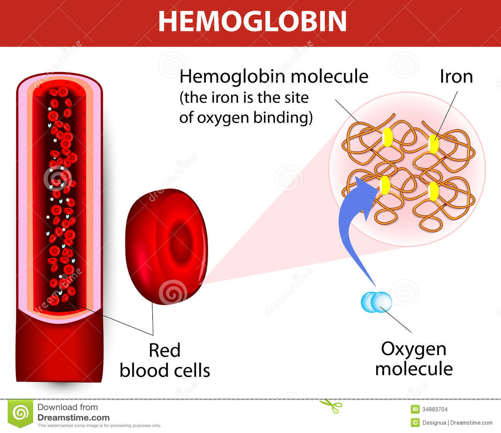 Molecule Haemoglobin Stock Images