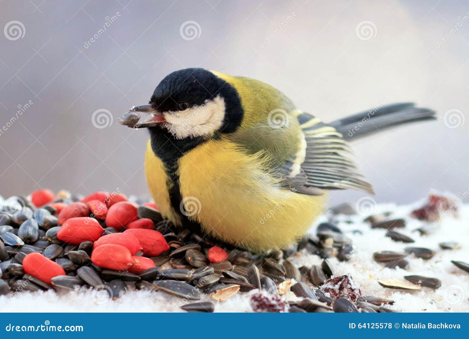 Mollige gele vogel die zaden en noten in de sneeuw eten